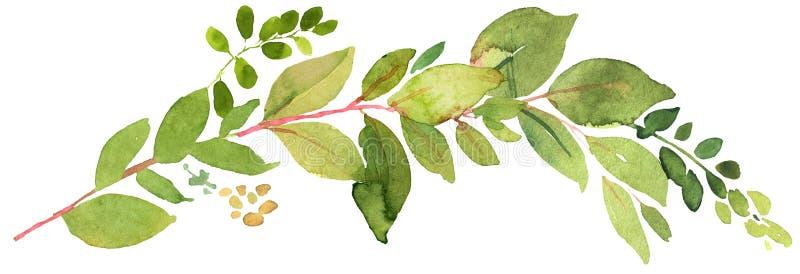 Ilustração verde da aquarela do galho ilustração do vetor