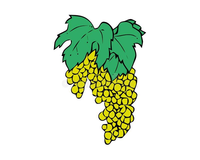 Ilustração verde das uvas - grupo de uvas verdes com a haste e a folha isoladas no fundo branco ilustração do vetor