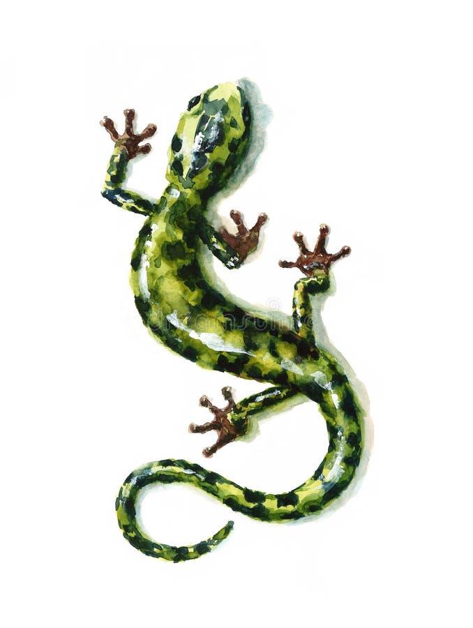 Ilustração verde do lagarto da natureza da aquarela da salamandra pintado à mão ilustração stock