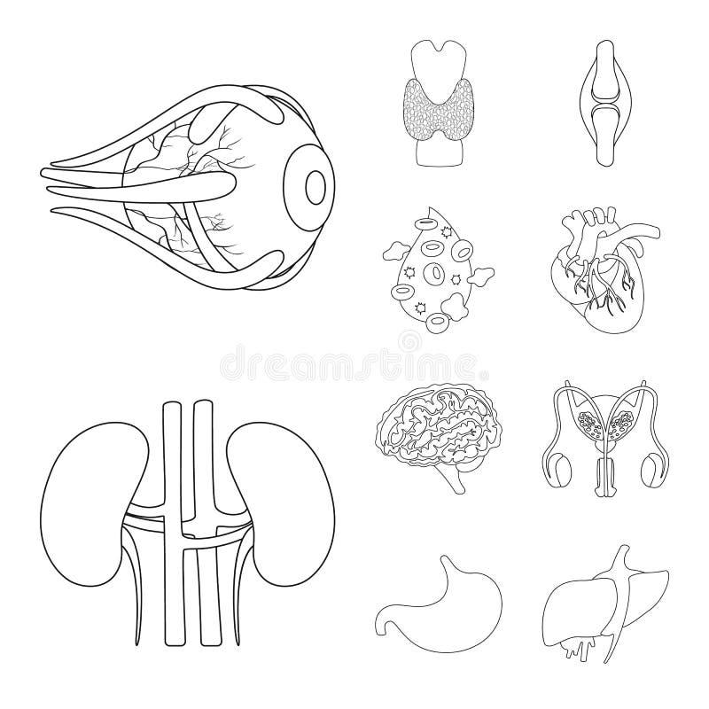 Ilustração vetorial da anatomia e símbolo de órgão Conjunto de ilustrações de anatomia e vetor de estoque médico ilustração stock