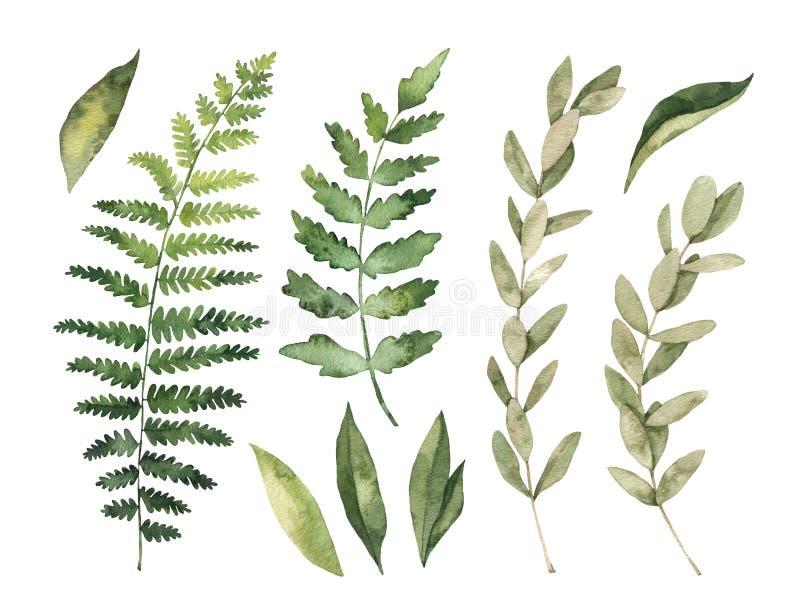 Ilustrações da aguarela Clipart botânico Jogo das folhas verdes ilustração do vetor