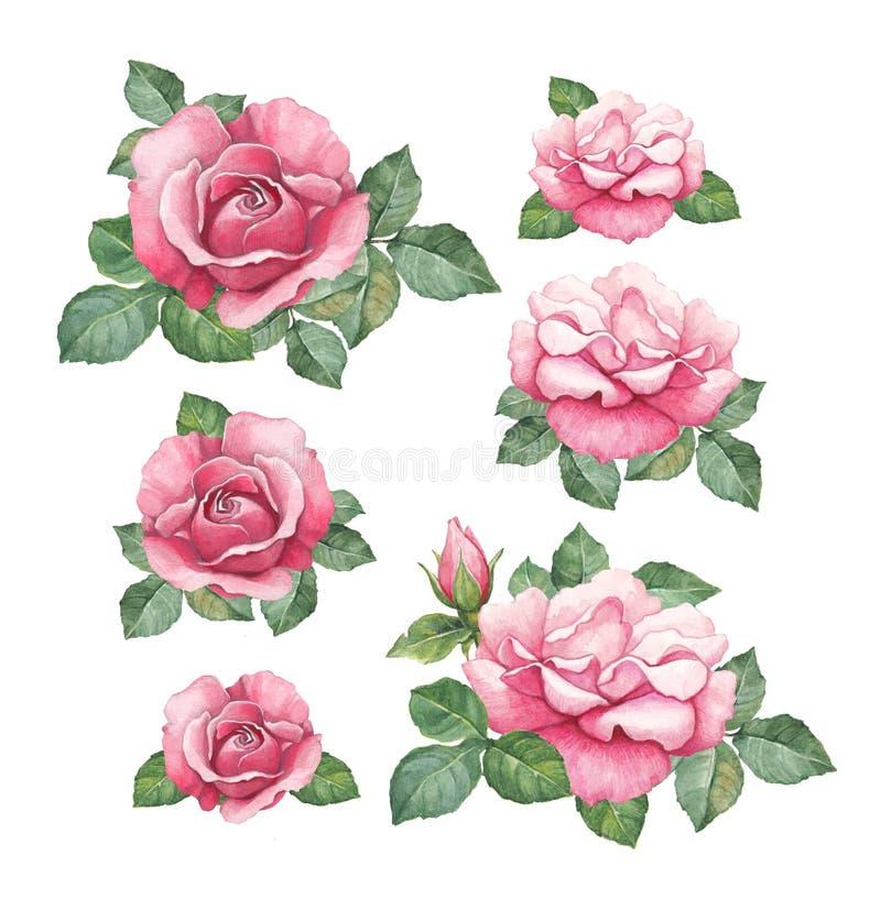 Ilustrações da aquarela das rosas ilustração royalty free