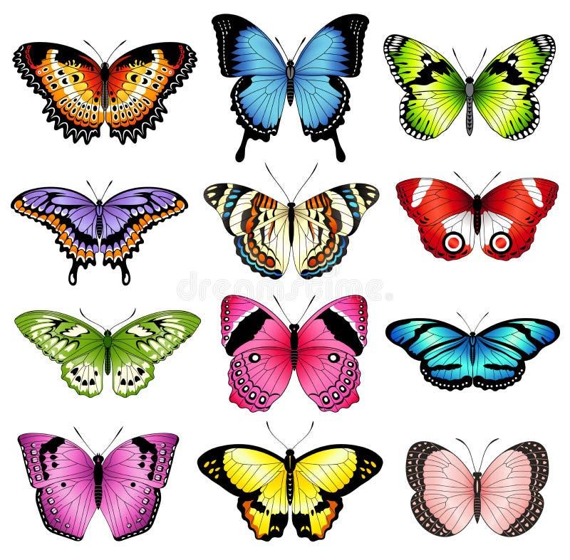 Ilustrações da borboleta da cor do vetor ilustração do vetor