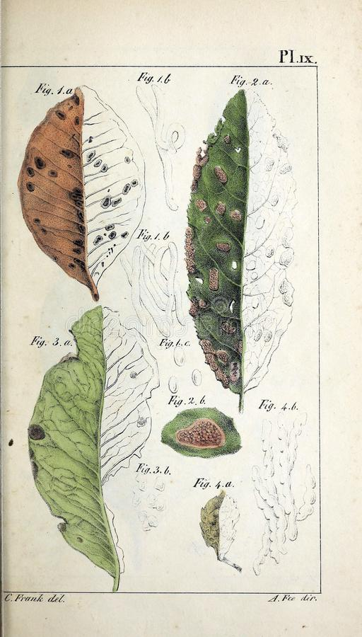 Ilustrações da planta ilustração stock