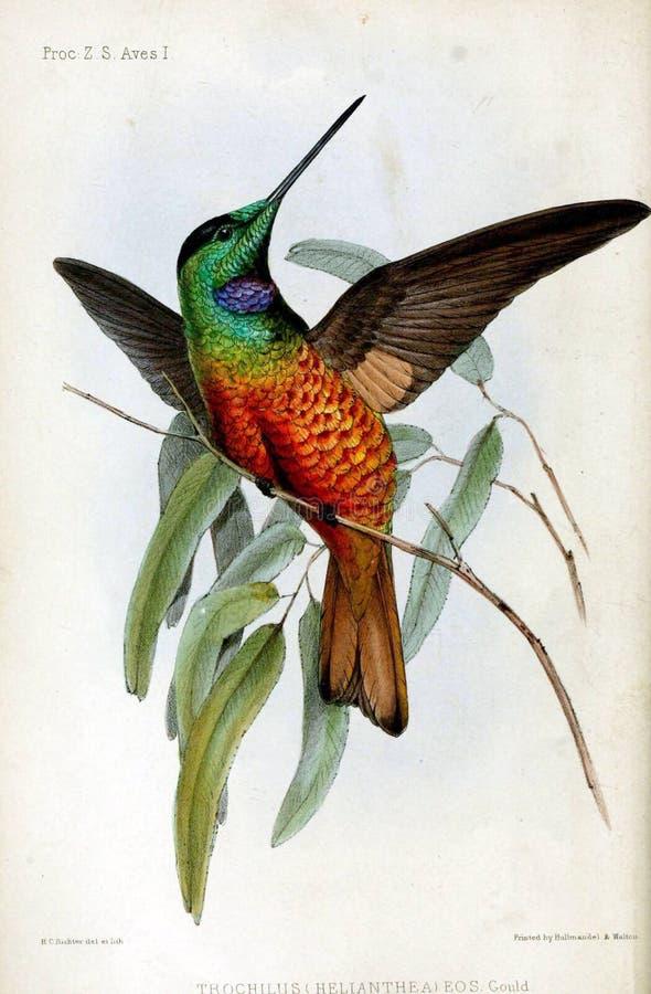 Ilustrações do animal ilustração stock