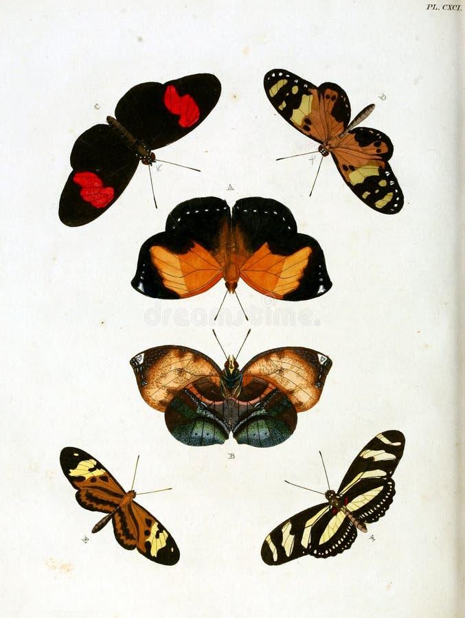 Ilustrações do inseto ilustração royalty free
