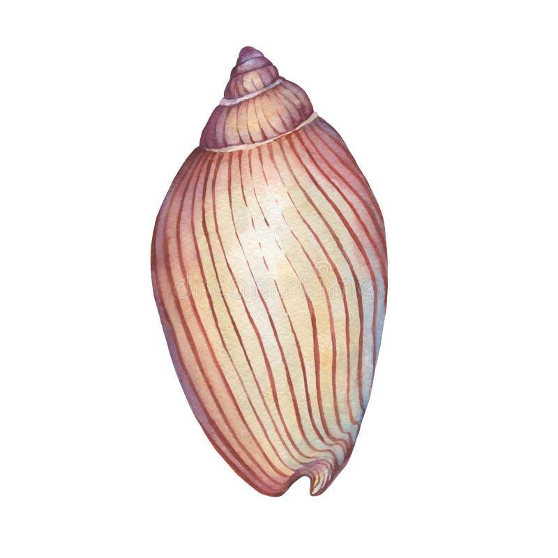Ilustrações do shell do mar ilustração do vetor