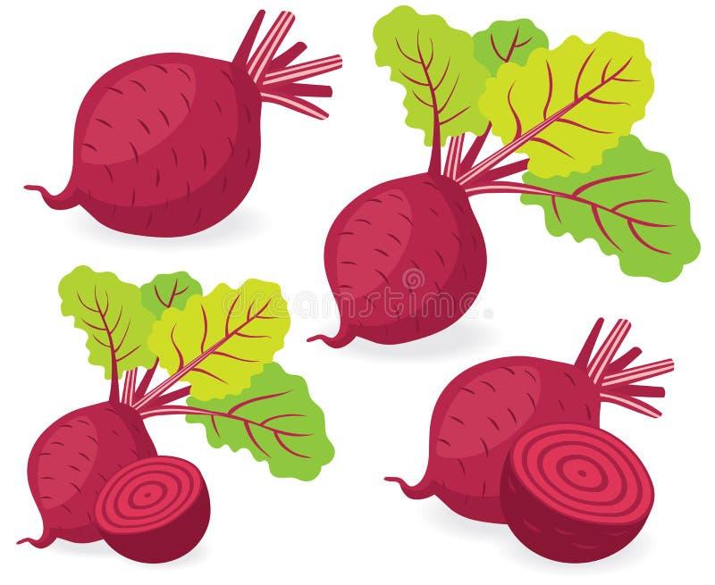 Ilustrações do vetor das beterrabas ilustração stock