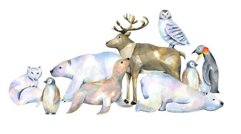 Ilustrações polares bonitos dos animais da aquarela ilustração royalty free