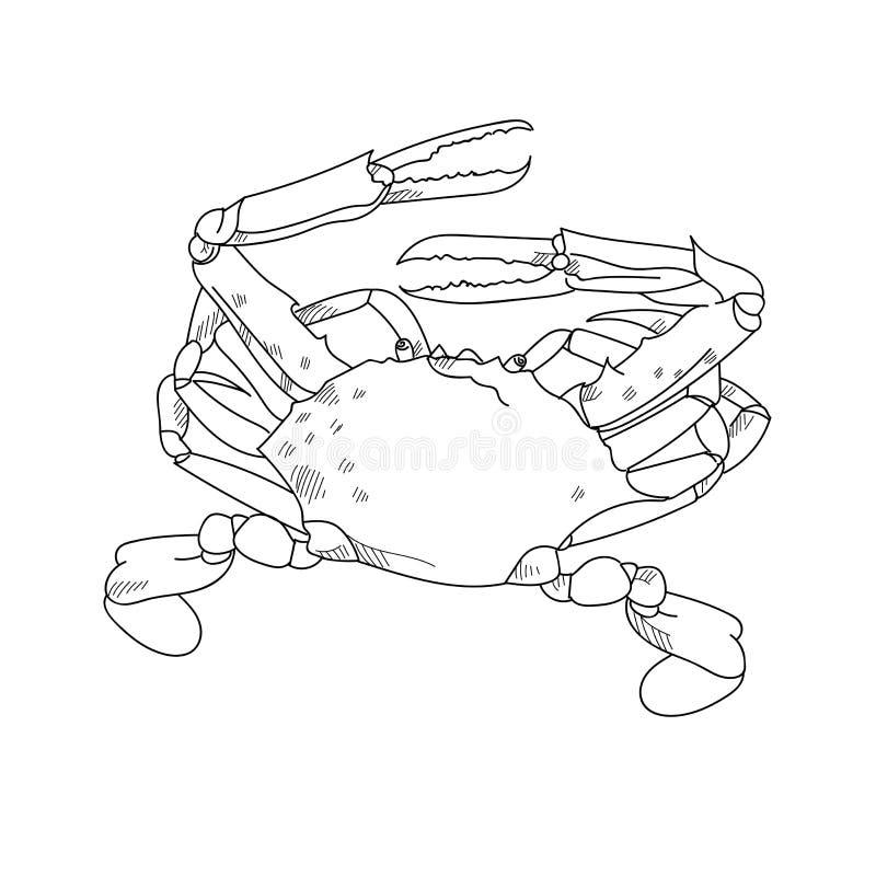 Ilustrações tiradas do esboço do caranguejo do nadador mão azul de l gravado ilustração do vetor