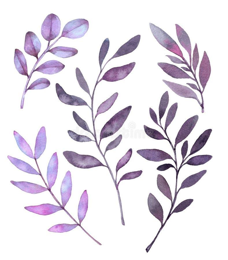 Ilustrações tiradas mão da aquarela Clipart botânico Grupo de p ilustração stock