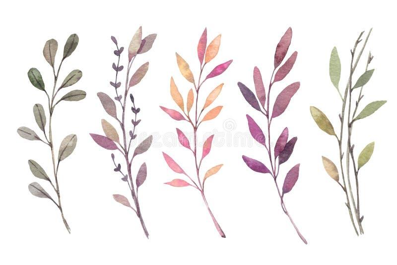 Ilustrações tiradas mão da aquarela Clipart de Autumn Botanical S ilustração stock