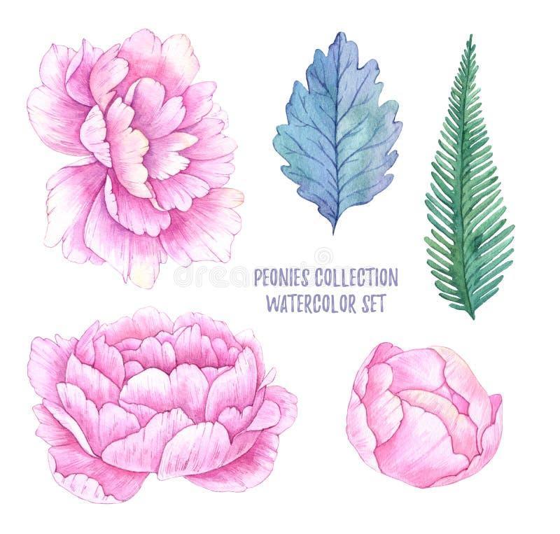 Ilustrações tiradas mão da aquarela Folhas da mola e peônias f ilustração stock