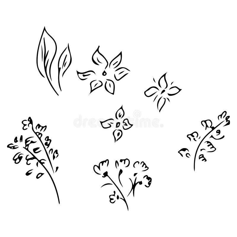 Ilustra??es tiradas m?o da flor abstrata da pe?nia isolada no branco Esbo?o tirado m?o de uma flor Linha arte ilustração do vetor