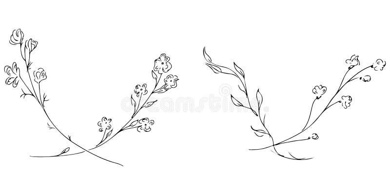 Ilustra??es tiradas m?o de dois ramos com as flores e as folhas isoladas no branco Esbo?o tirado m?o do flores Linha arte ilustração do vetor