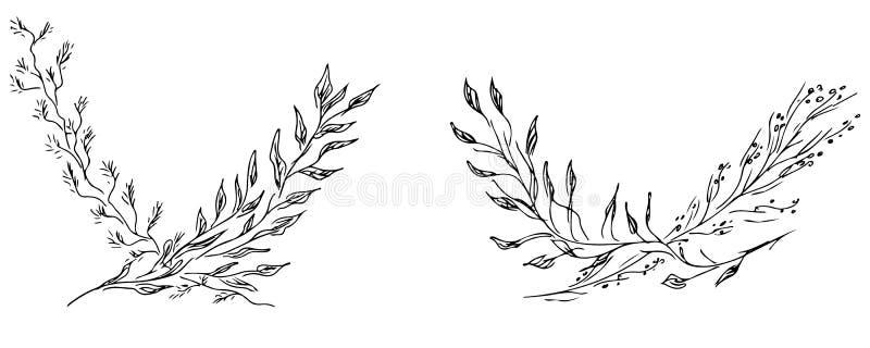 Ilustra??es tiradas m?o de dois ramos com as flores e as folhas isoladas no branco Esbo?o tirado m?o do flores Linha arte ilustração royalty free