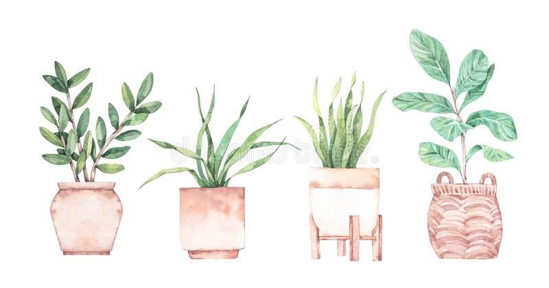 Ilustra??o da aguarela E r greenery succulent Fundo floral do projeto?, contexto, projeto da ilustra??o ilustração stock