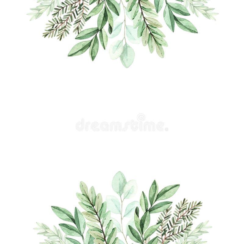 Ilustra??o da aquarela da mola Quadro botânico com eucalipto, ramos do abeto e folhas greenery Elementos do projeto gr?fico ilustração do vetor