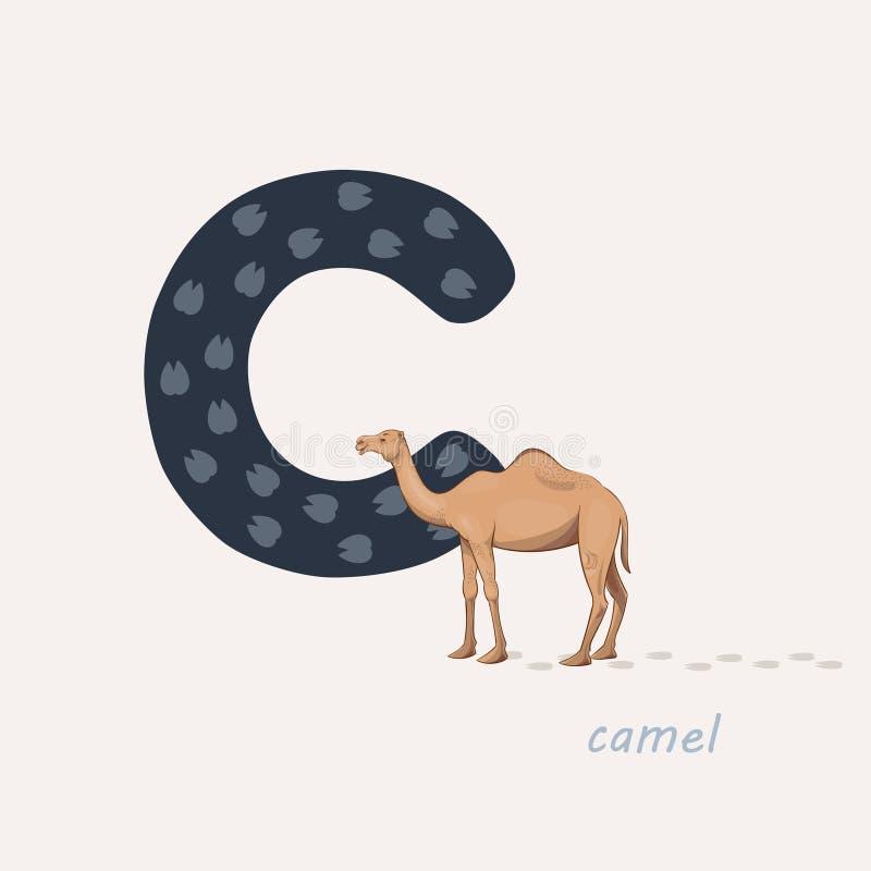Ilustra??o do vetor Letra azul C com pegadas dos camelos, um camelo dos desenhos animados Alfabeto animal ilustração do vetor