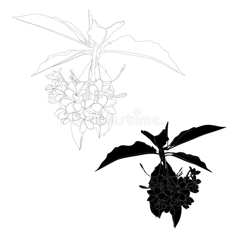 Ilustra??o floral tropical A linha flores do plumeria ramifica com folhas ilustração royalty free