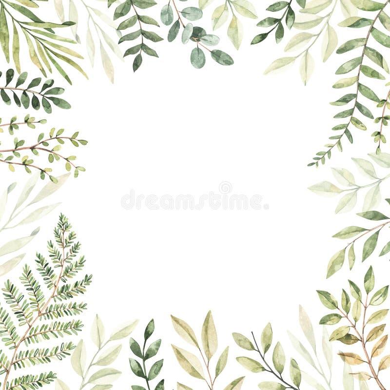 Ilustra??o tirada m?o da aguarela Quadro bot?nico com eucalipto, ramos, samambaia e folhas greenery Elementos do projeto gr?fico ilustração stock