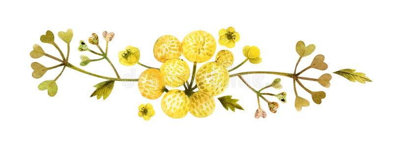 Ilustración amarilla de las plantas silvestres ilustración del vector