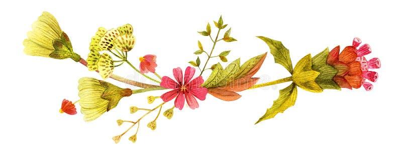 Ilustración amarilla de las plantas silvestres libre illustration