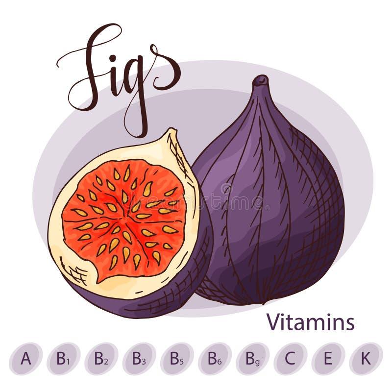 Ilustración colorida del vector Diseño de la comida con la fruta Bosquejo dibujado mano de higos Producto fresco orgánico para el libre illustration