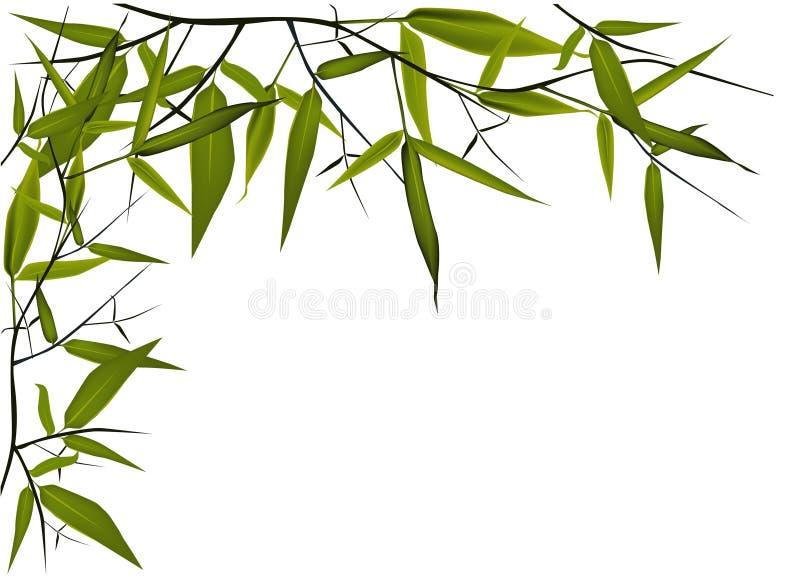 Ilustración de bambú ilustración del vector