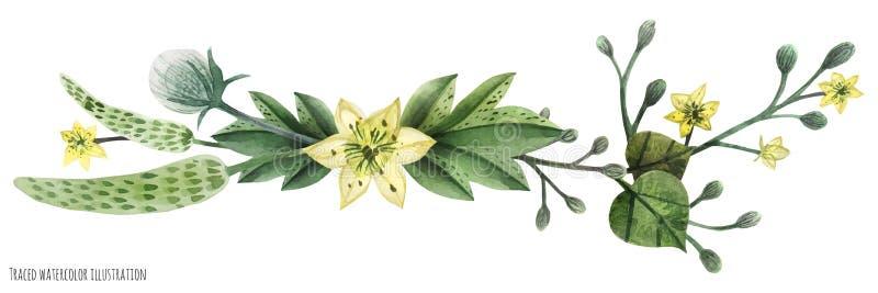 Ilustración de la acuarela de las plantas silvestres ilustración del vector
