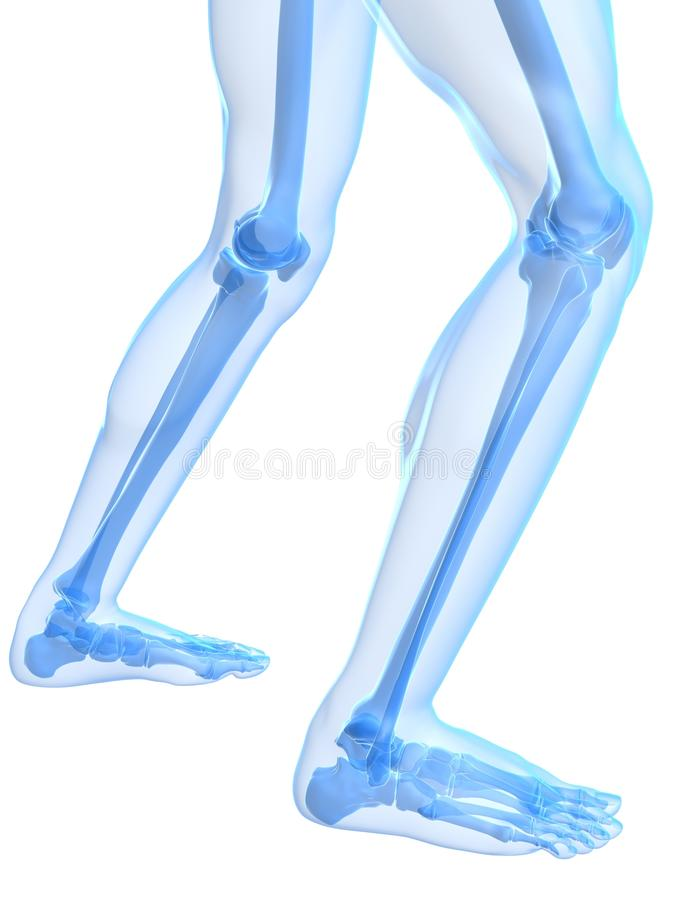 Ilustración de la rodilla stock de ilustración. Ilustración de ...
