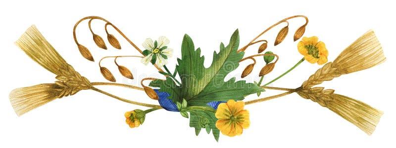 Ilustración de las plantas silvestres de Escocia stock de ilustración