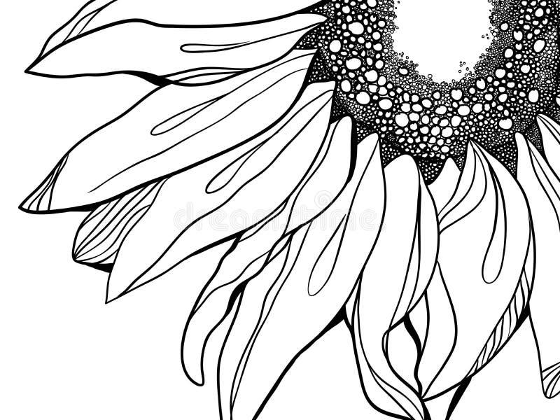 Ilustración del girasol stock de ilustración