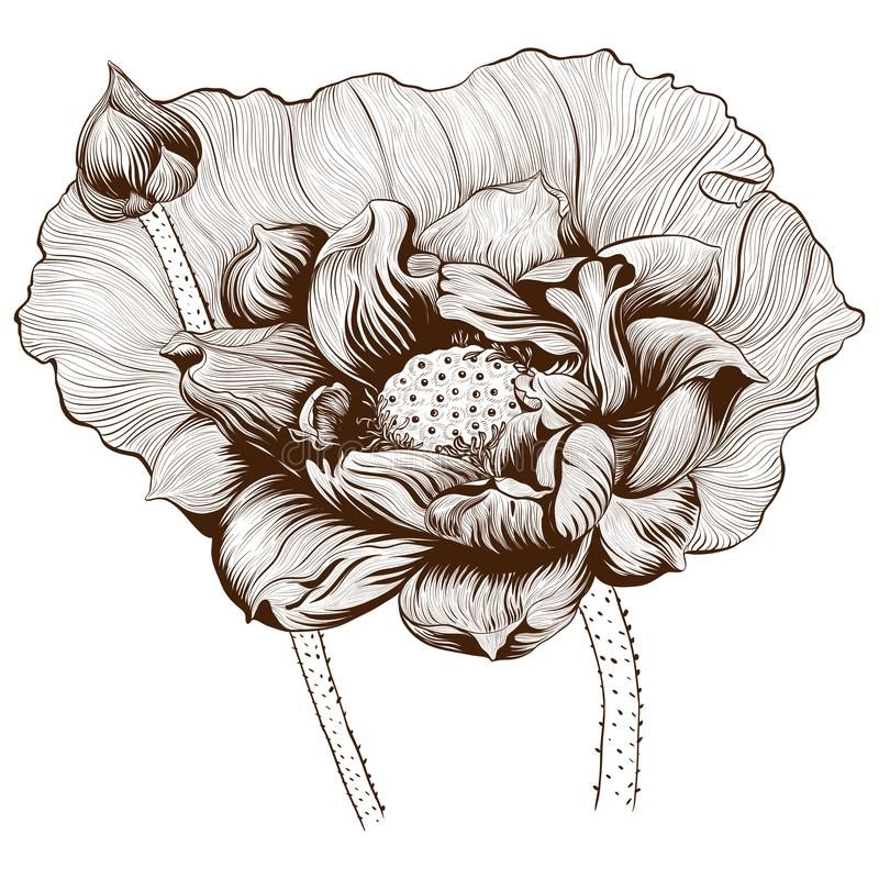 Ilustración del vector Flores y brotes de Lotus en un fondo blanco Plantas de la perfumería y del cosmético wallpaper Composición libre illustration