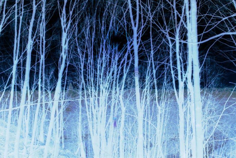 Ilustración invertida de troncos de árbol en fondo oscuro foto de archivo