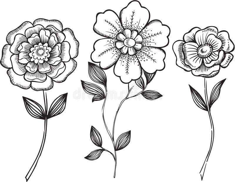 Ilustración ornamental del vector de las flores ilustración del vector