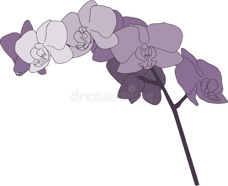Ilustración púrpura del vástago de la orquídea ilustración del vector