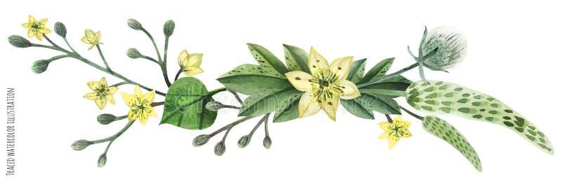 Ilustraci?n de la acuarela de las plantas silvestres libre illustration