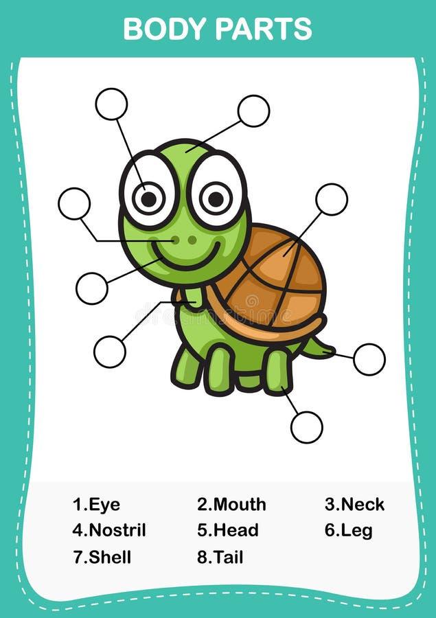 Ilustracja żółwia słownictwa część ciało royalty ilustracja