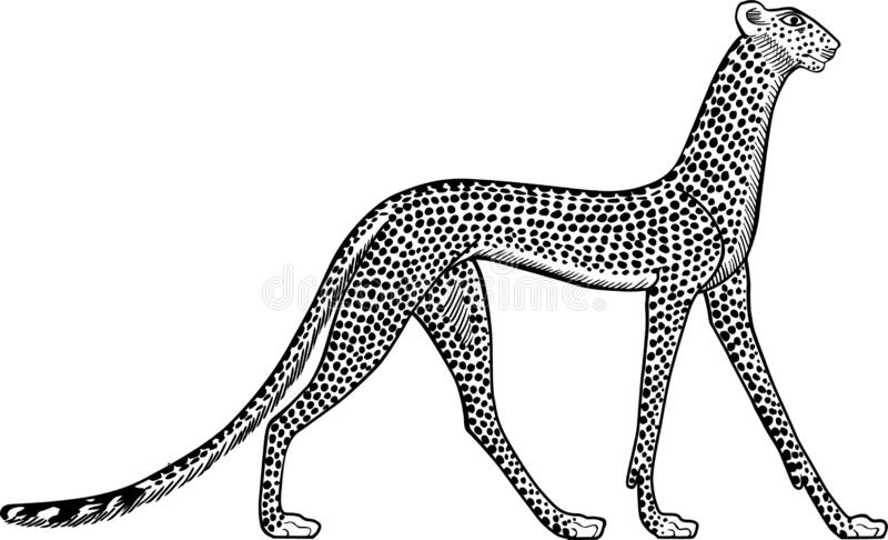 Ilustracja antyczny Egipski lampart Biały tło ilustracja wektor