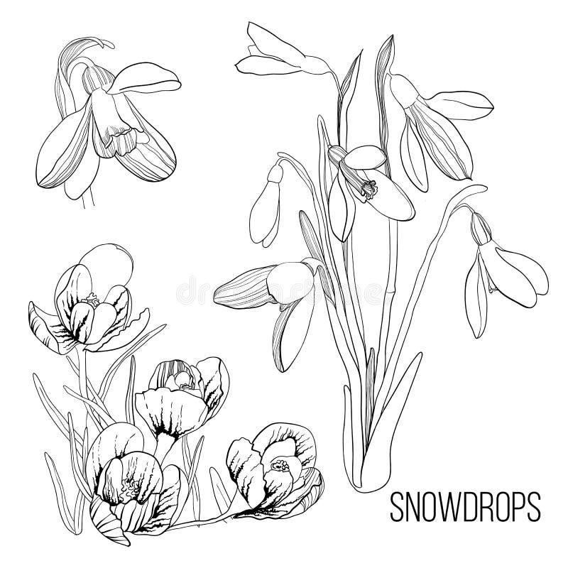 Ilustracja biel z czarnym rysunku konturu nakreśleniem śnieżyczka Graficznego projekta odizolowywający przedmiot dla wiosny ilustracji