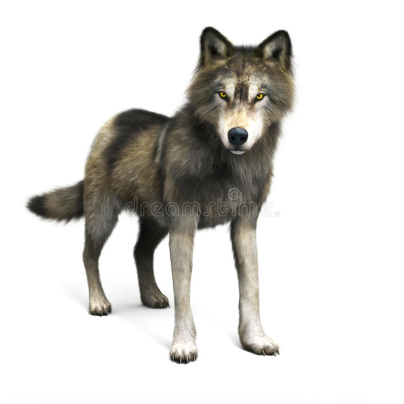 Ilustracja brown wilk na białym tle ilustracji