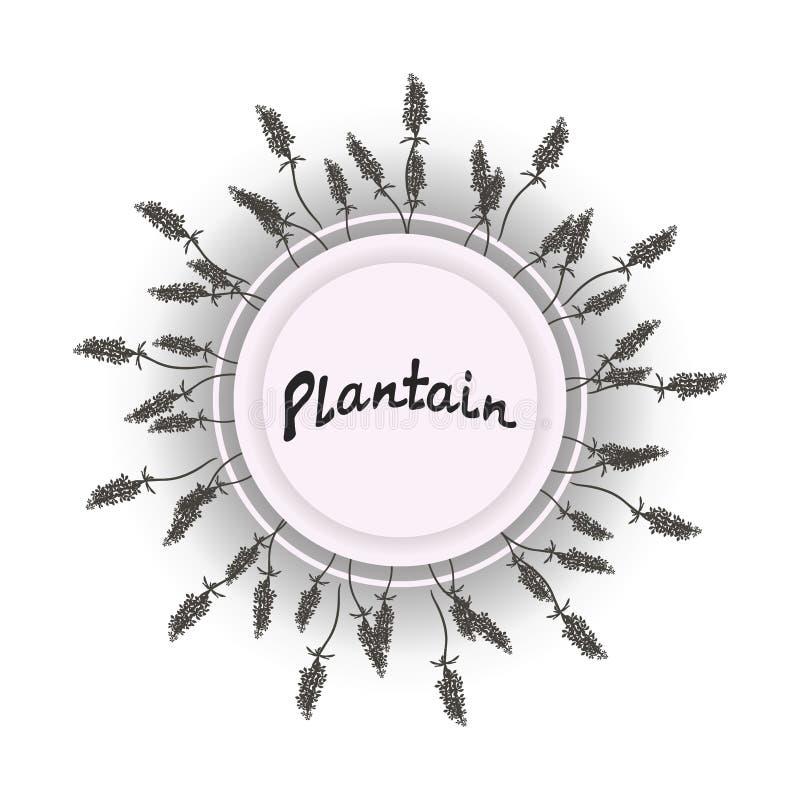 Ilustracja ikony zielne rośliny dla festiwalu plakata pojęcia lub charaktery i, wianek świezi potomstwa tekst ilustracji