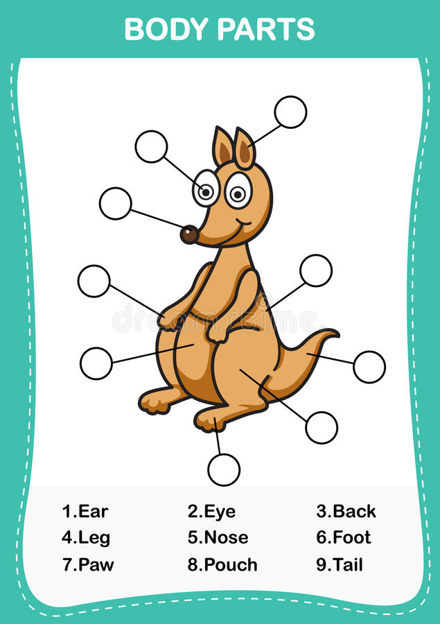 Ilustracja kangura słownictwa część ciało ilustracja wektor