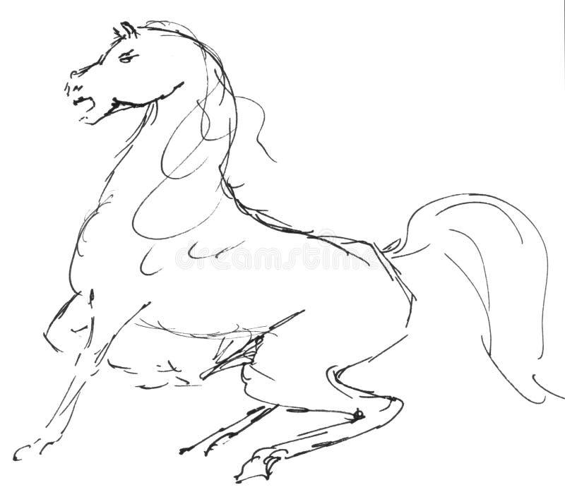 Ilustracja końska