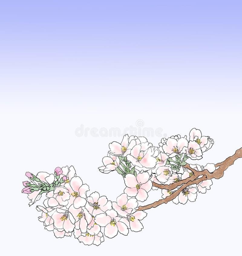 ilustracja kwiat wiśni ilustracja wektor