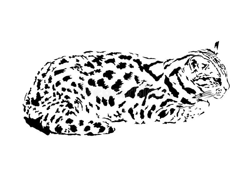 ilustracja lamparta kot lub połowu kot, odosobniony wektor ilustracja wektor