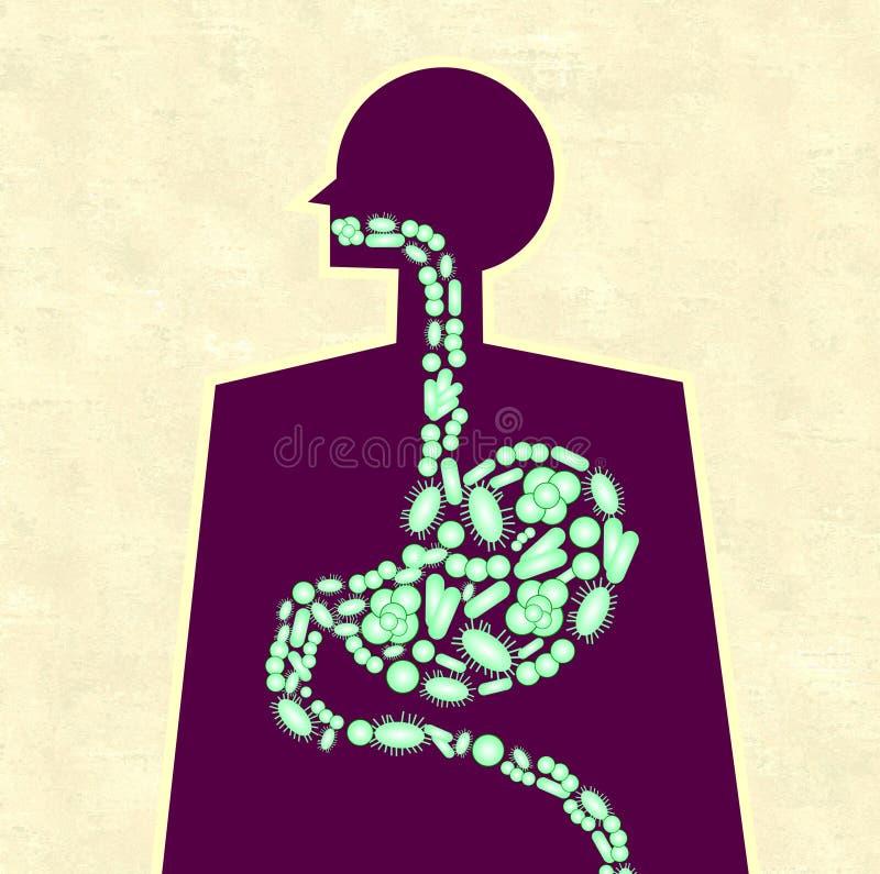 Ilustracja ludzki żołądek kształtował z zielonymi bakteriami ilustracja wektor