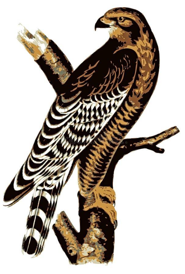ilustracja myszołów ilustracja wektor