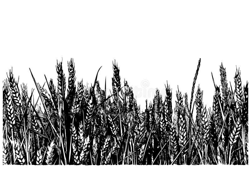 Ilustracja pszeniczny pole ilustracji